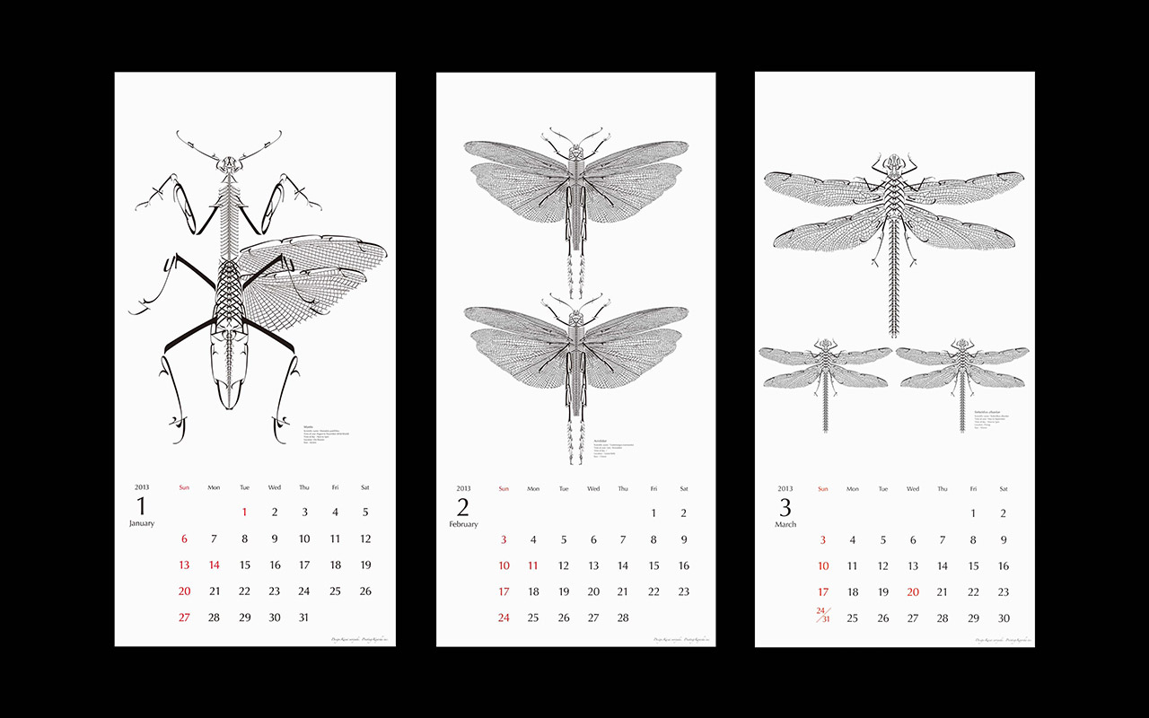 The calendar of insect collection